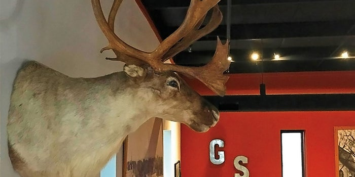 How a Taxidermy Caribou Head Made Me a Better CEO (Really)