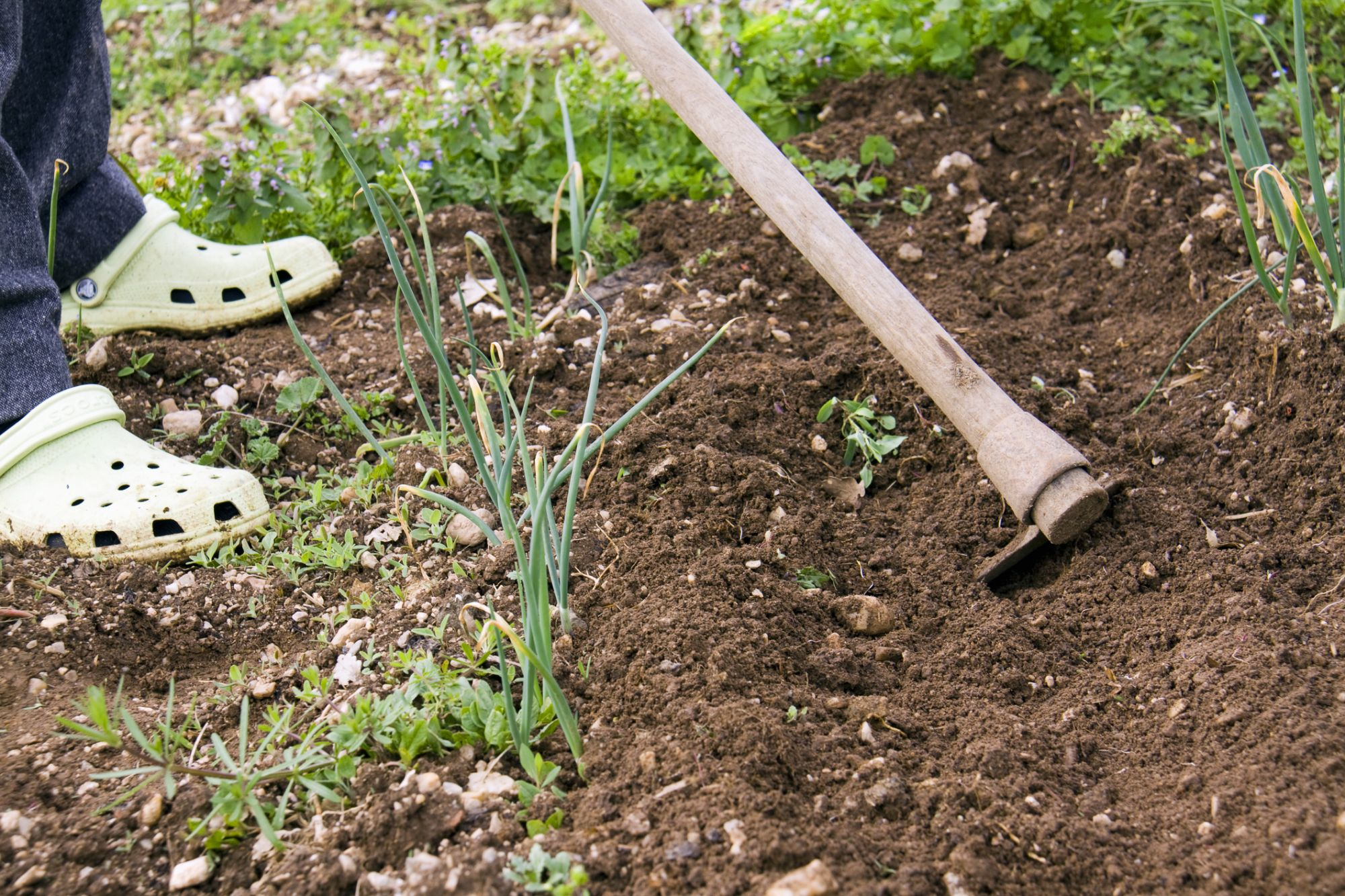 Why Entrepreneurs Should Be More Like Weeds in a Garden