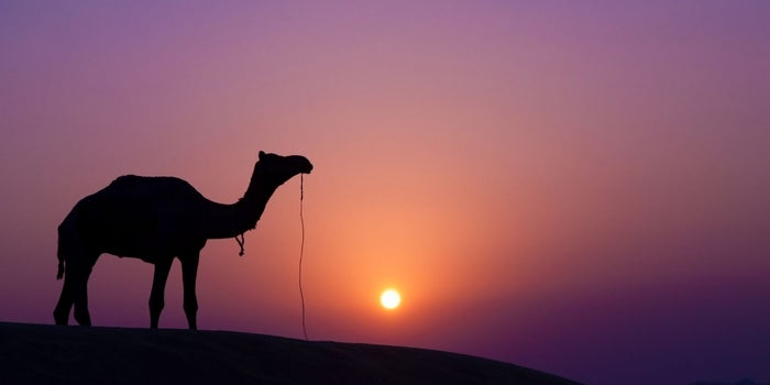 Forget Unicorns. Startups Should Be Camels.