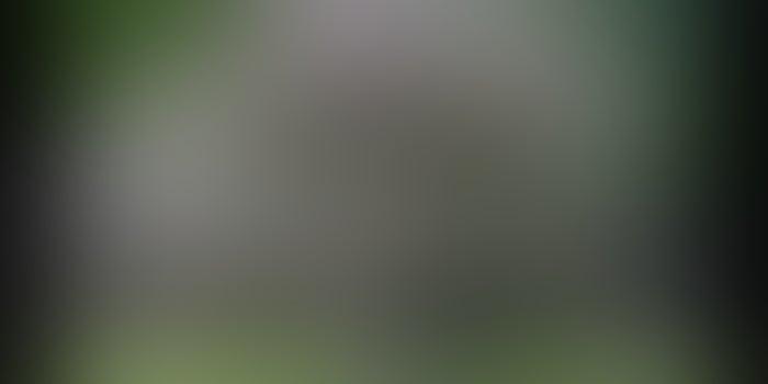 Explotación forestal de la paulownia