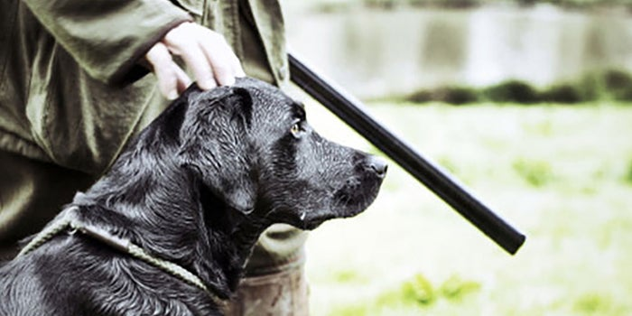 Escuela de entrenamiento canino