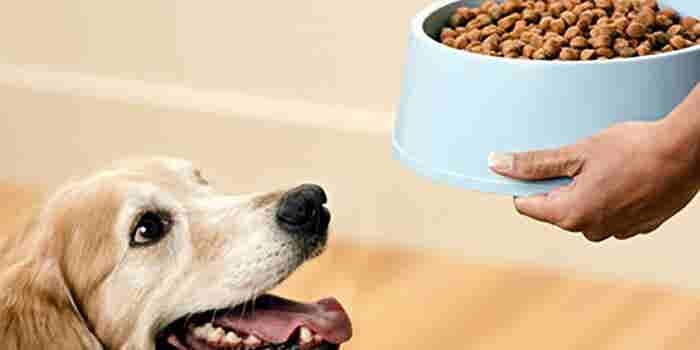 Delivery de comida para mascotas