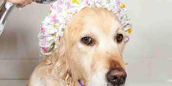 Estética canina a domicilio
