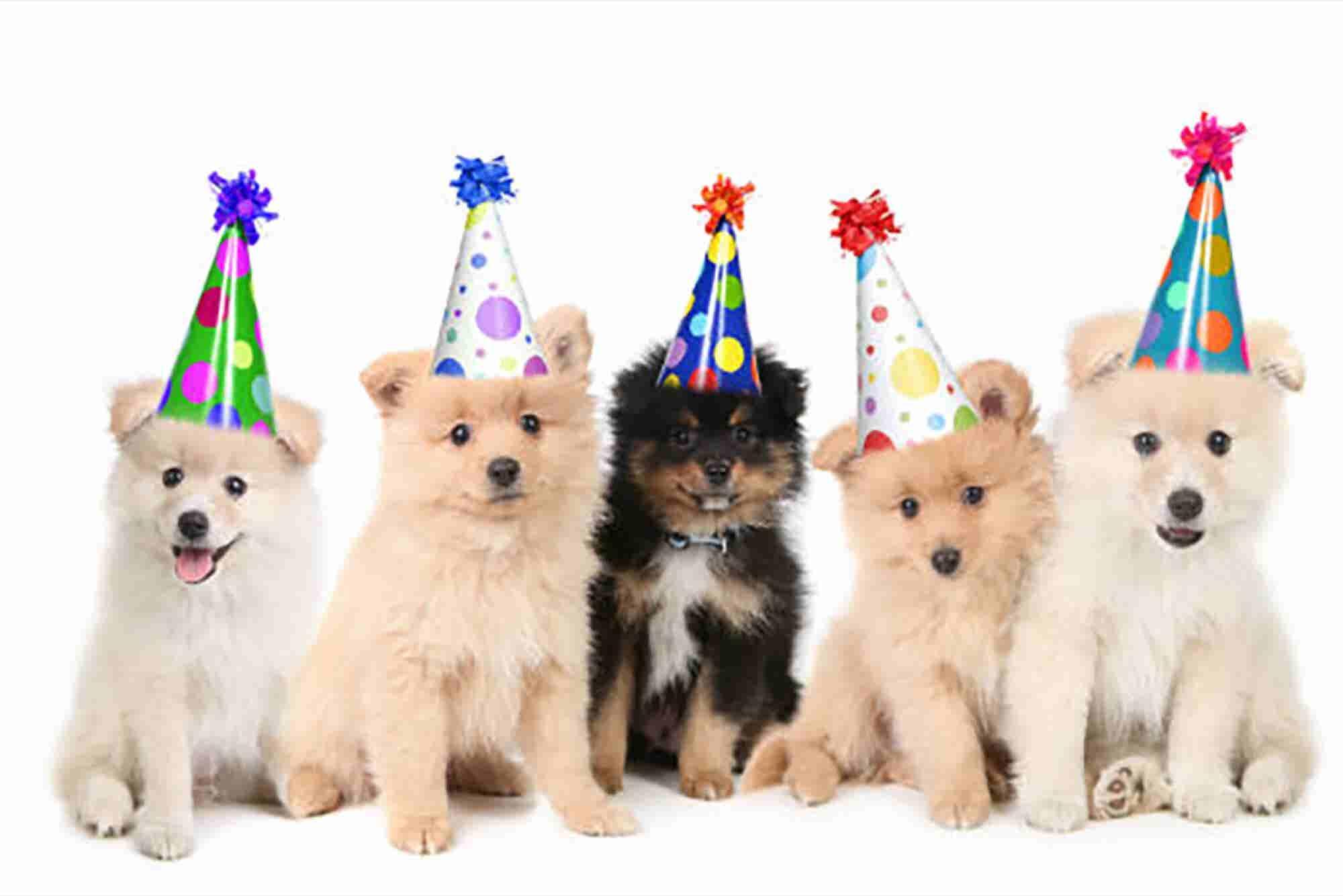 ¡Abre un negocio de fiestas para mascotas!
