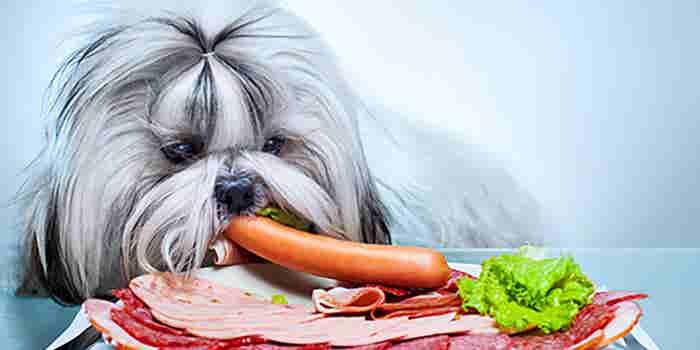 Comida gourmet para perros