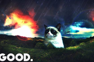 Grumpy Cat and the Thriving Cat Meme Marketplace