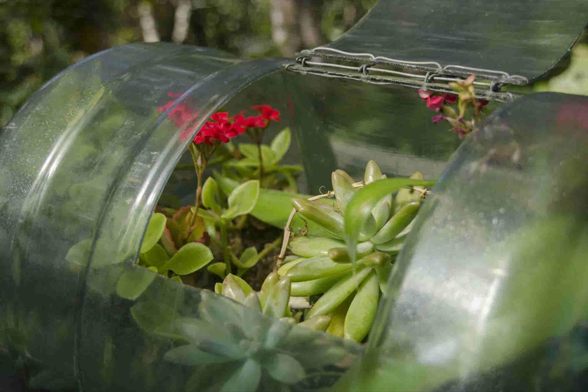 Jardines miniatura en botellas