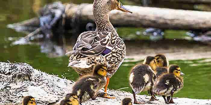 Leadership: Nature or Nurture?