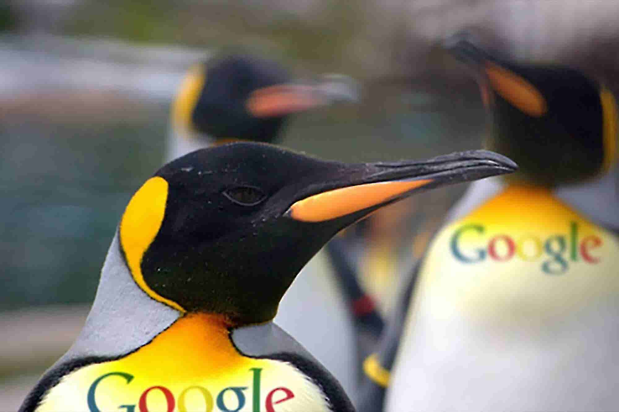 Penguin 2.0: What to Expect From Google's Next Search Update