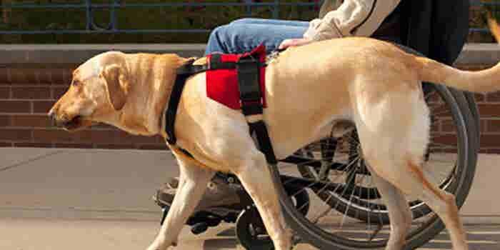 Perros de asistencia para discapacitados
