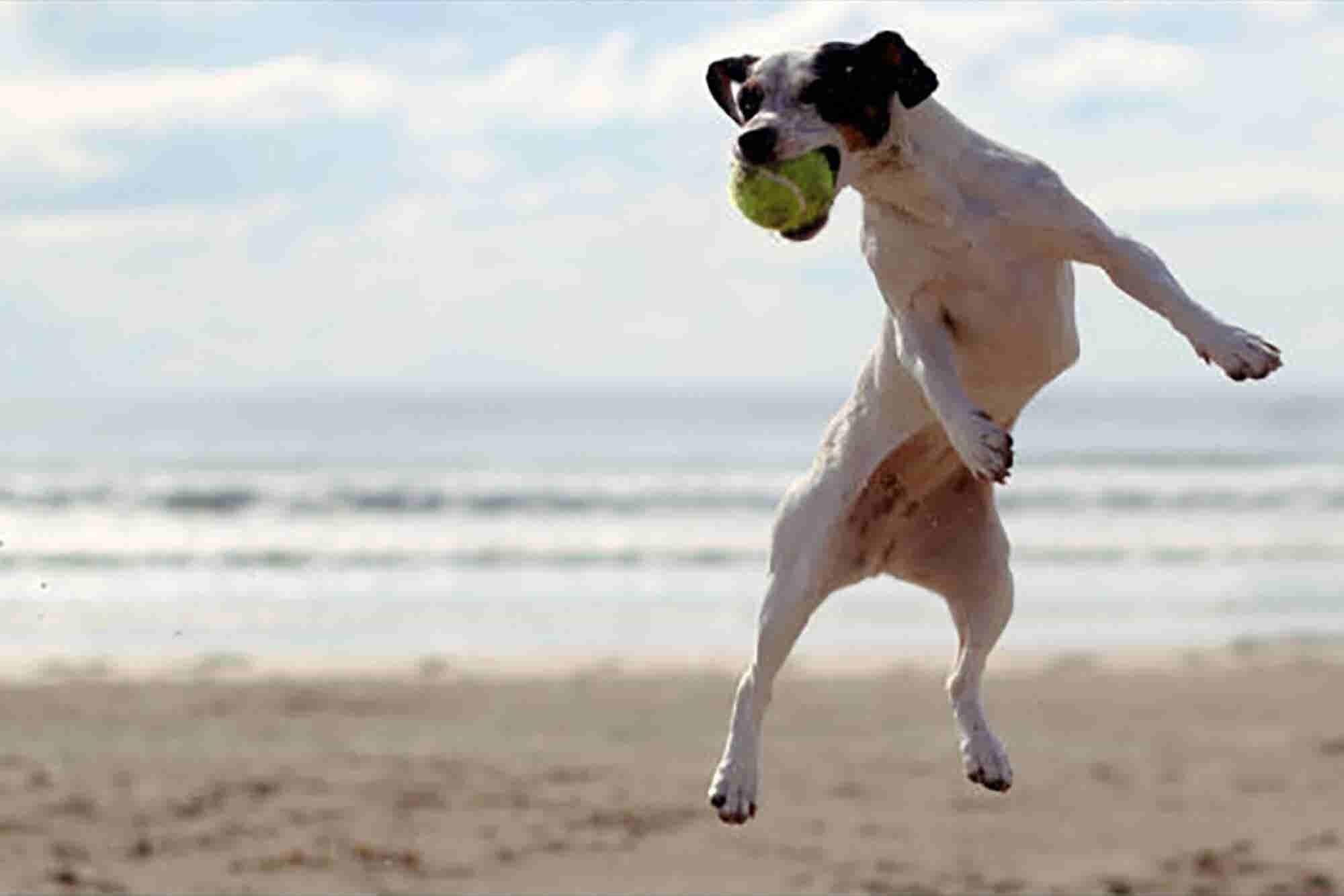 Pensión para mascotas en la playa