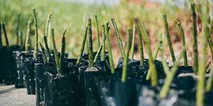 Cápsulas para reforestación