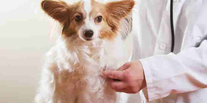 Seguro médico para mascotas