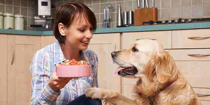 Servicio de nutrición para mascotas