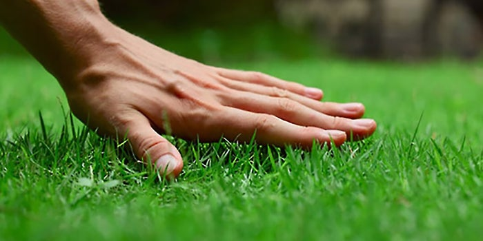 - How To Start A Lawn Care Or Landscaping Business