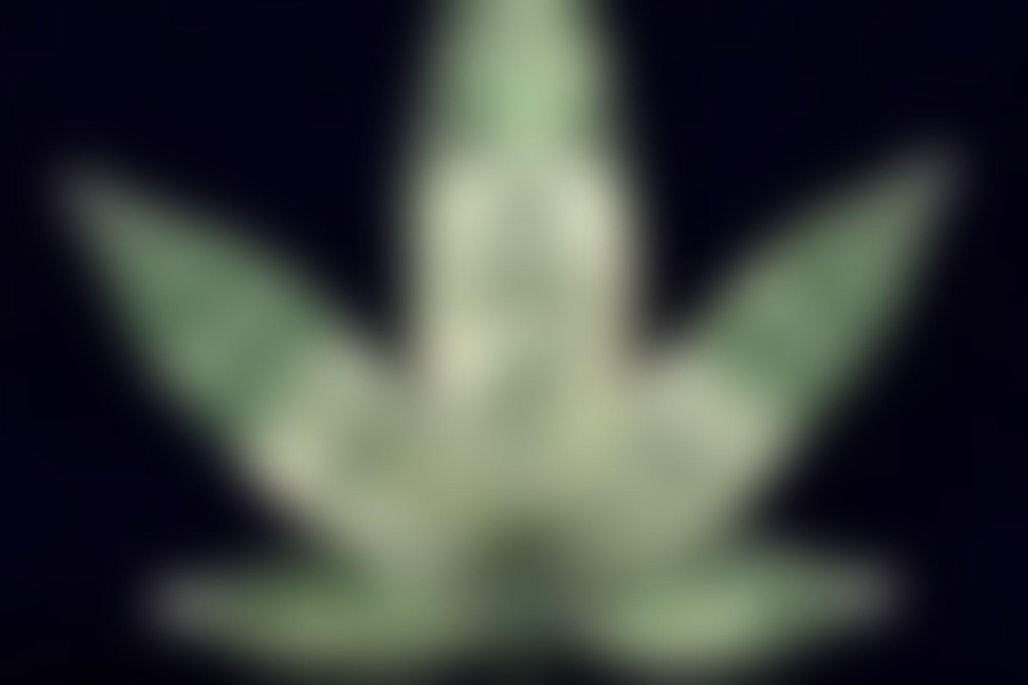 The Half-Baked Plan for Pot Legalization