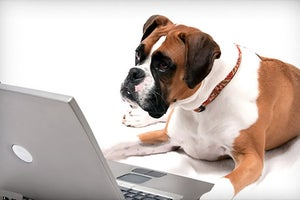 What Dogs Can Teach Us About Working More Effectively