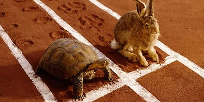 why slow steady wins race - Learn The Secrets to Success in Affiliate Marketing