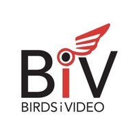 BirdsiVideo Logo