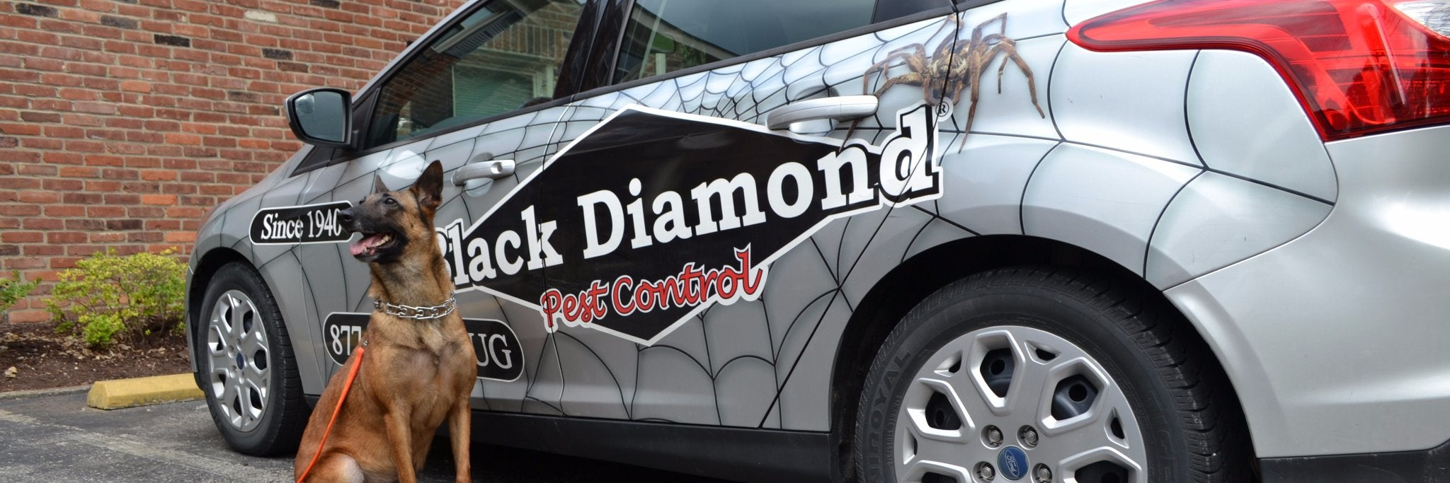 Black Diamond Pest Control