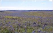 tallgrass_prairie