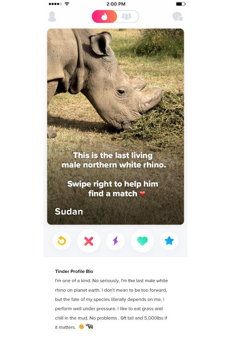 """The rhino's profile reads: """"I perform well under pressure. I like to eat  grass and chill in the mud."""""""