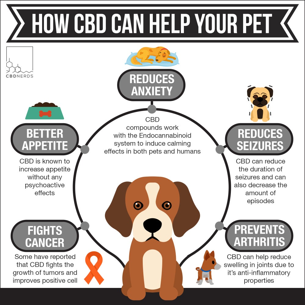 Image result for endocannabinoid system dog