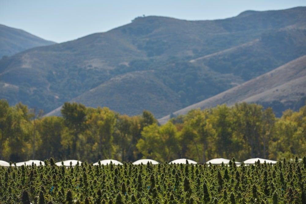 Sara Rotman's farm in Santa Barbara, California.