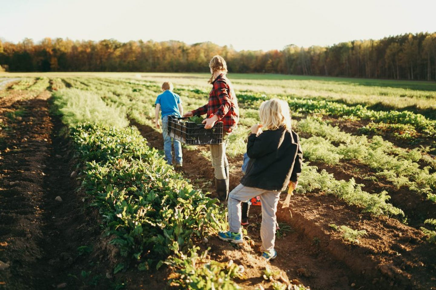 Family farms are struggling with two hidden challenges: health insurance and child care