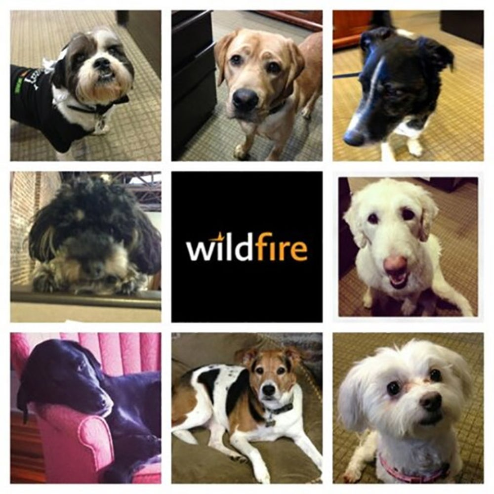 Wildfire Marketing Gang