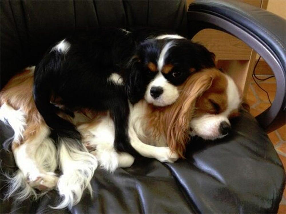 Cooper & Abigail