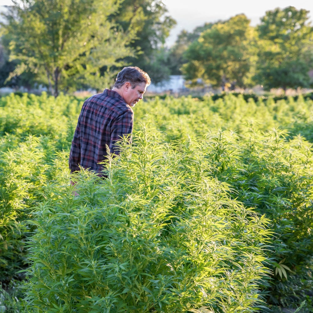 Let's Talk Hemp and The 422