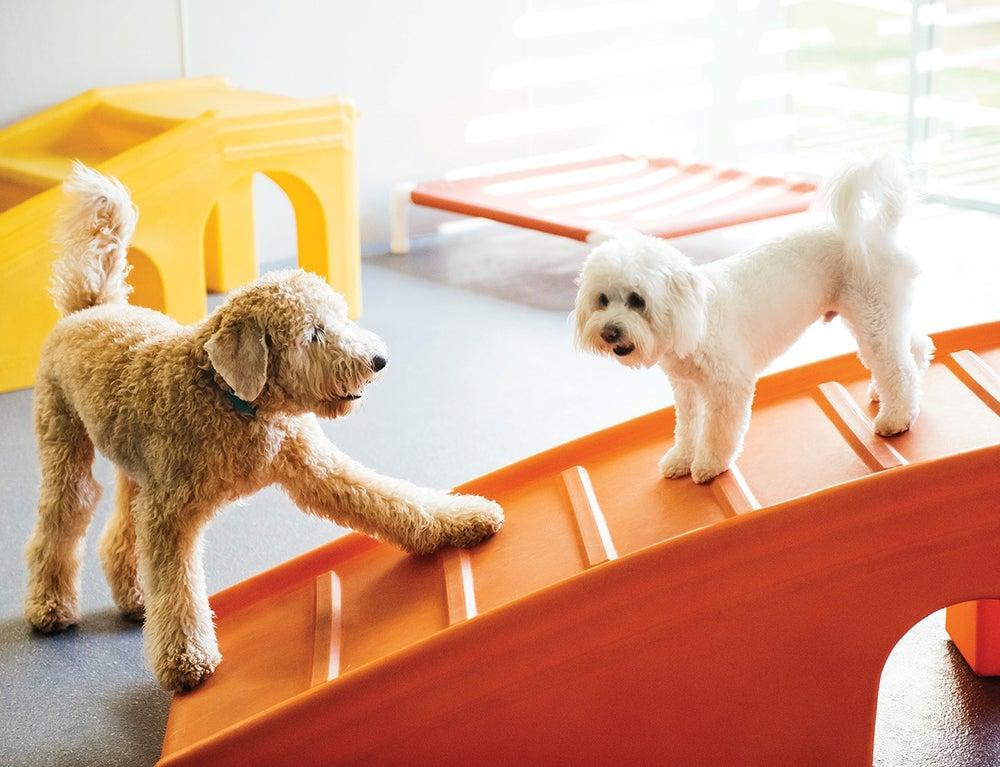 Dogtopia Prepares for Pandemic Pups