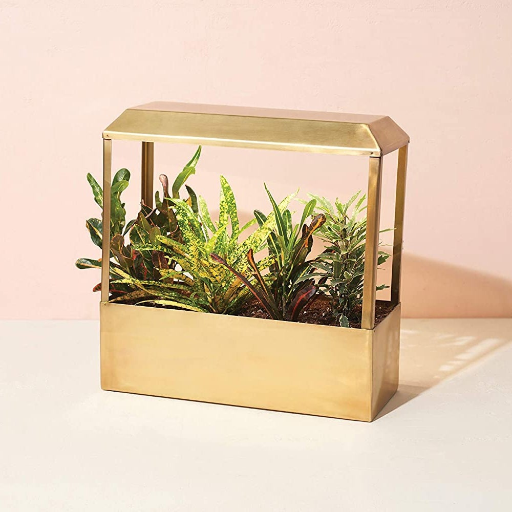 Best Overall: Modern Sprout Brass Growhouse V2 ($199)