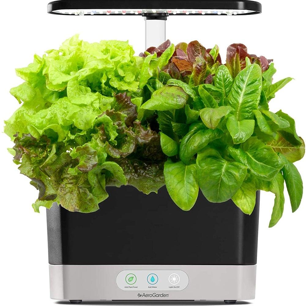 Best for Salad: AeroGarden Harvest ($107)
