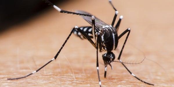 8. Mosquito Joe