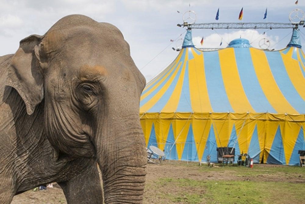 2. Bezos' father was a circus performer.