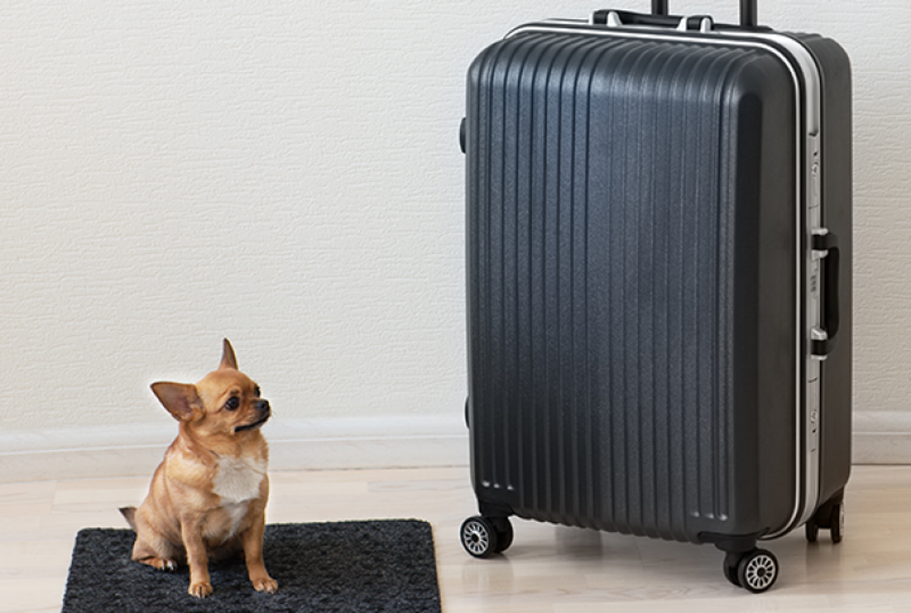 Finding Fido in your suitcase