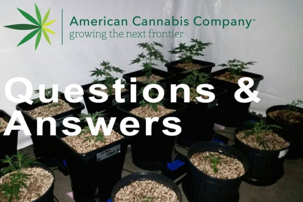 Cannabis industry consulting