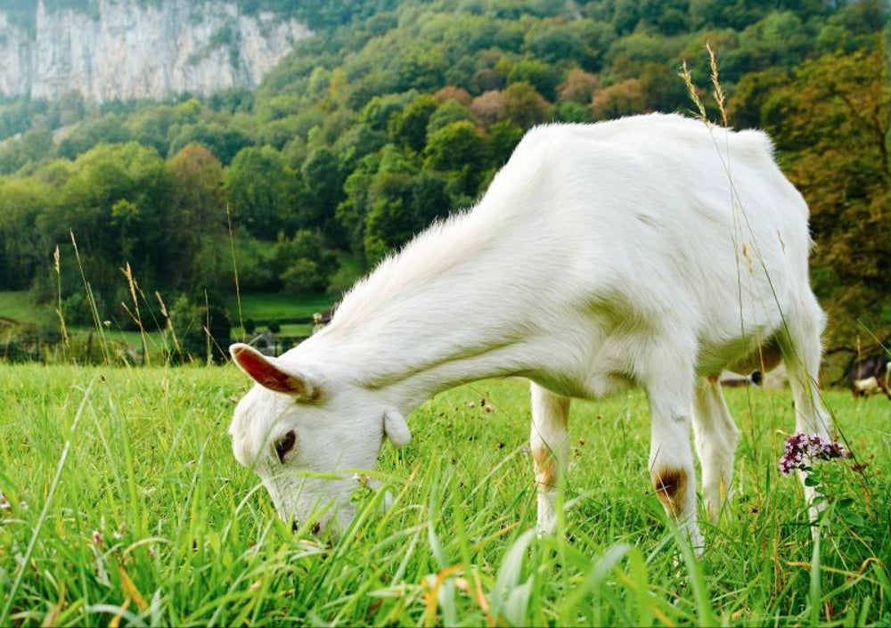 Hire a goat grazer.
