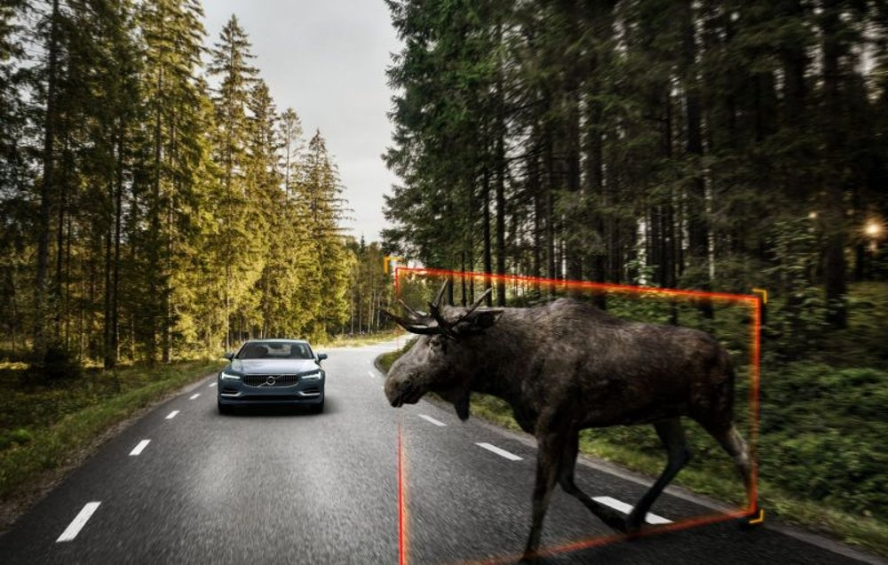 """Large Animal Protection"" (a semi-autonomous driving feature) means you won't hit this moose."