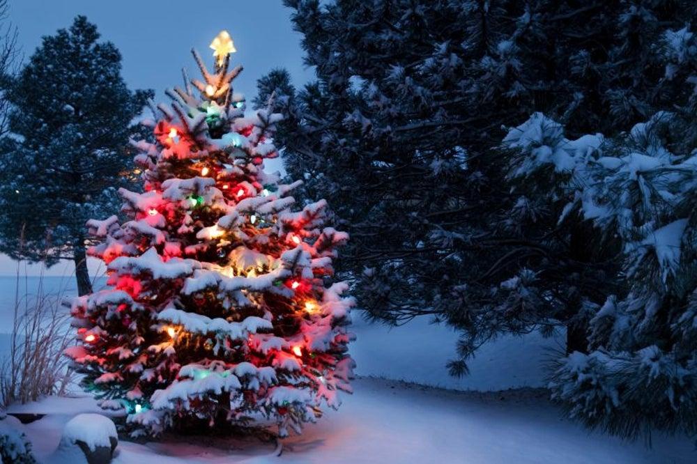 Un árbol de navidad para todo el año
