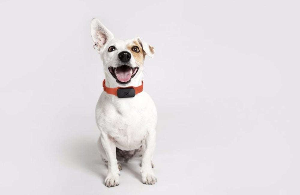 For pet owners: A way to find Fido, every time