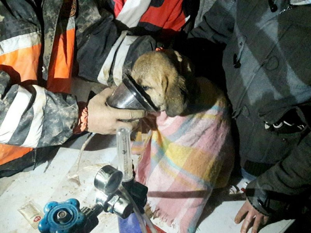 A community comes together to rescue a puppy from a well.