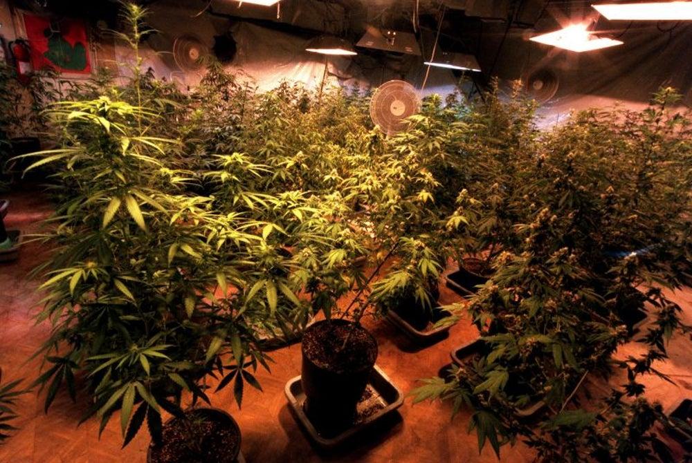 California legalizes medical marijuana in 1996.