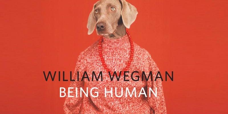 William Wegman's 'Being Human' book