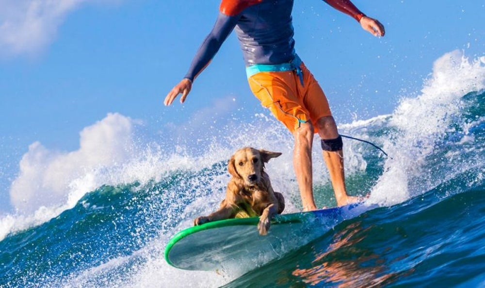 Dog surfing instructor