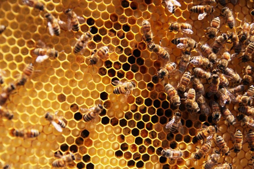 There was a string of beehive heists.