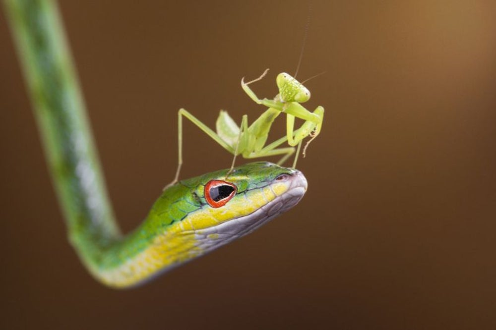 The was an insect and lizard heist valued at $40,000.