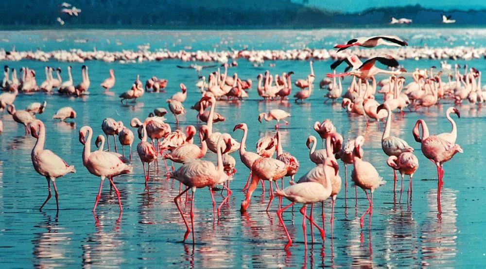 Mumbai: Finding Flamingos